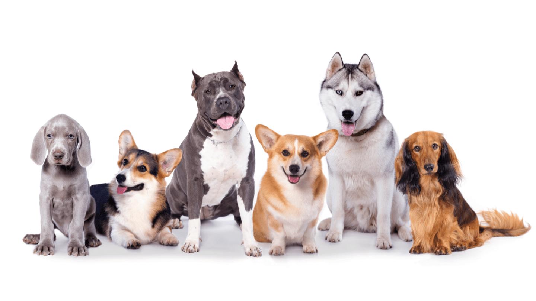 Doo Doo Pros Nashville Pet Waste Removal